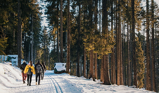 four person walking on snowfield between trees