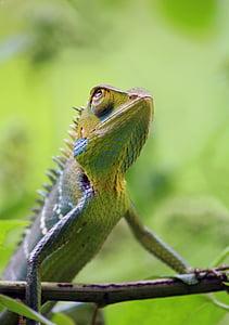 closeup photo of iguana