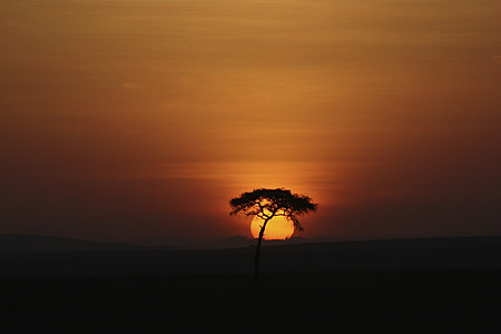 silhouette lone tree during golden hour