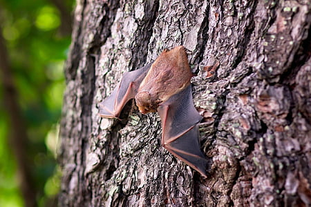 brown bat on brown tree
