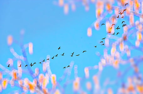 worm's eye view photography of flying birds under blue sky during daytime