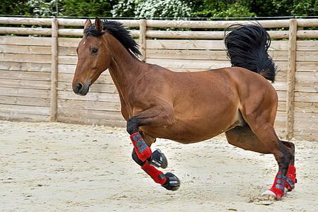 brown horse running at daytime
