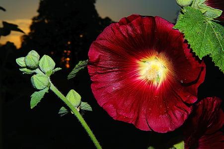 bloomed red petaled flower