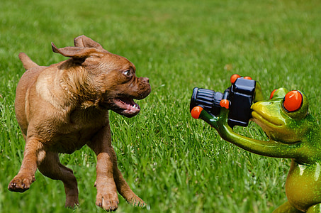 brown puppy playing on green frog holding camera figurine on green grass field