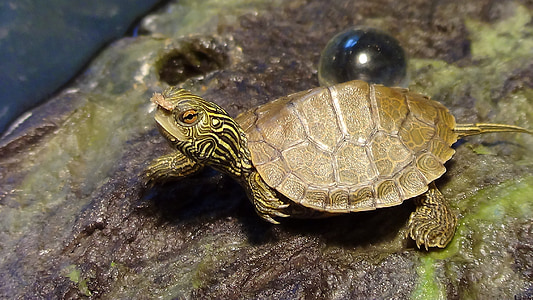 brown turtle near glass ball