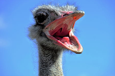 close up photography of ostrich head