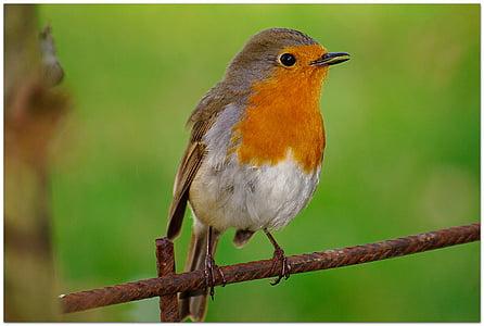 orange and gray bird selective focus photography