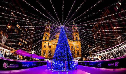 landscape photography of blue Christmas tree