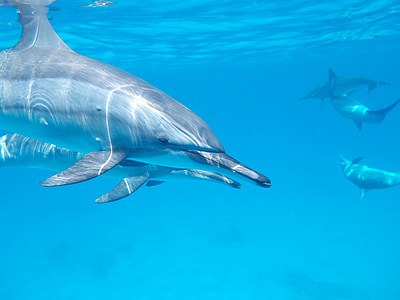 dolphins underwater during daytime