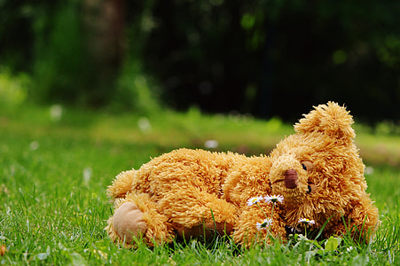 brown bear plush toy lying on green grass at daytime