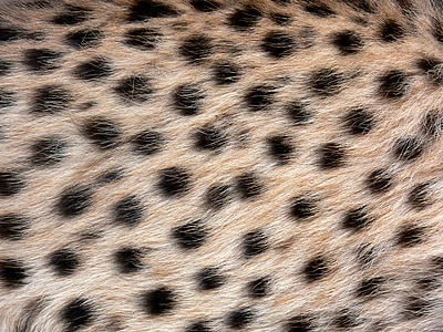 brown fur textile with black polka-dots