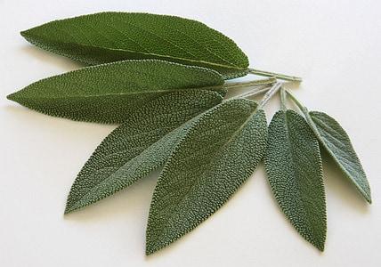 six green leaves