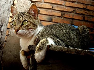 brown tabby cat on shelf