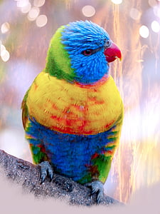 multicolored bird at daytime