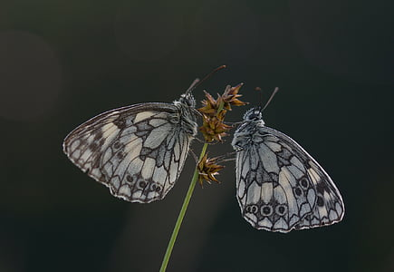 closeup photography of two gray butterflies