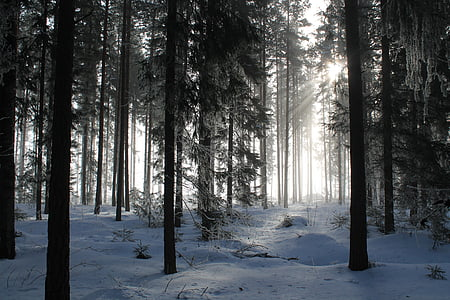landscape photo of forest during winter