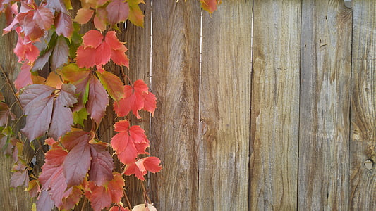 red and brown leaves hanging next to brown wood