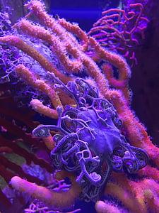 pink and purple corals