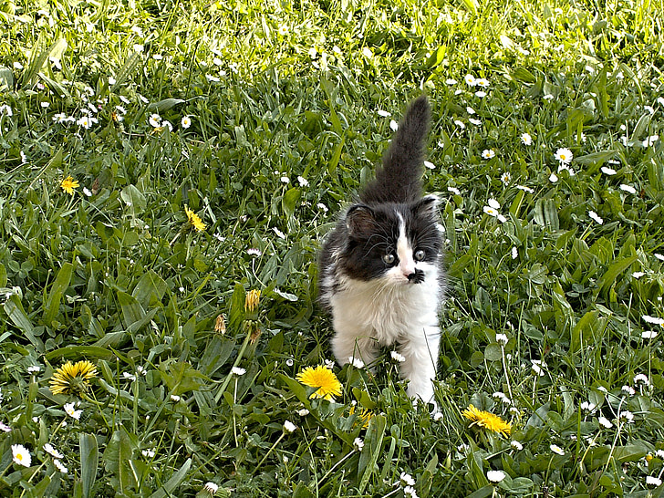 black and white cat walking on grass