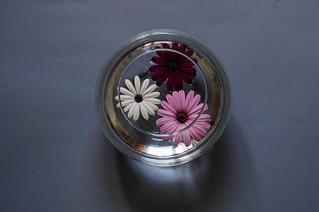 three assorted-color flowers in round clear glass case