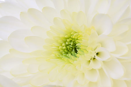 closeup photo of white and green petal flower