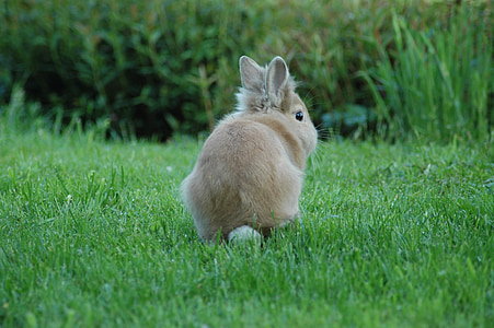 photography of bunny on lawn