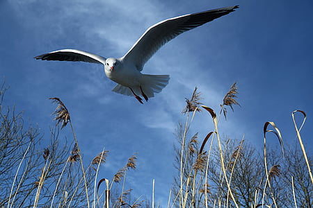 low angle photo of white seagull flying during daytime