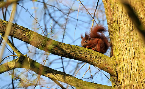 squirrel on tree close-up photography