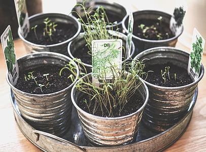 eight tin flowerpots with seedlings