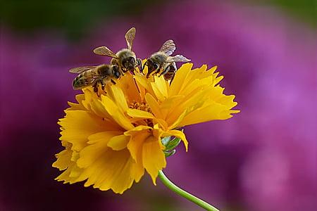 closeup photo of three bee on yellow petaled flower