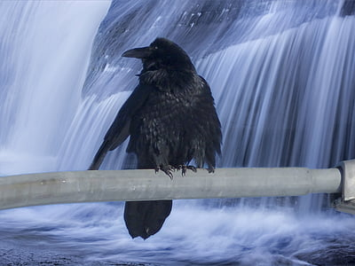 black bird on gray rod with a background of waterfalls