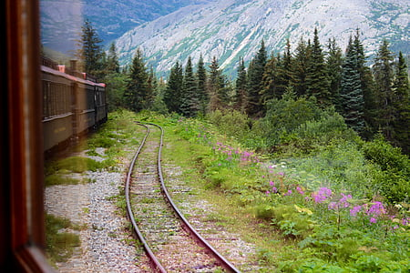 railway beside plants with pink flowers