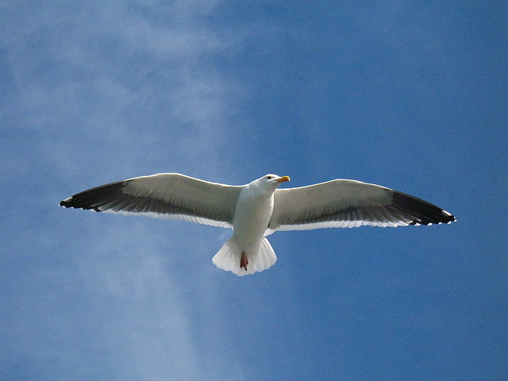 low angle photography white bird on sky