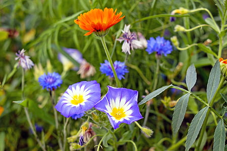 shallow focus photography of purple and orange flowers
