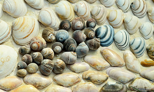 brown and blue sea shells