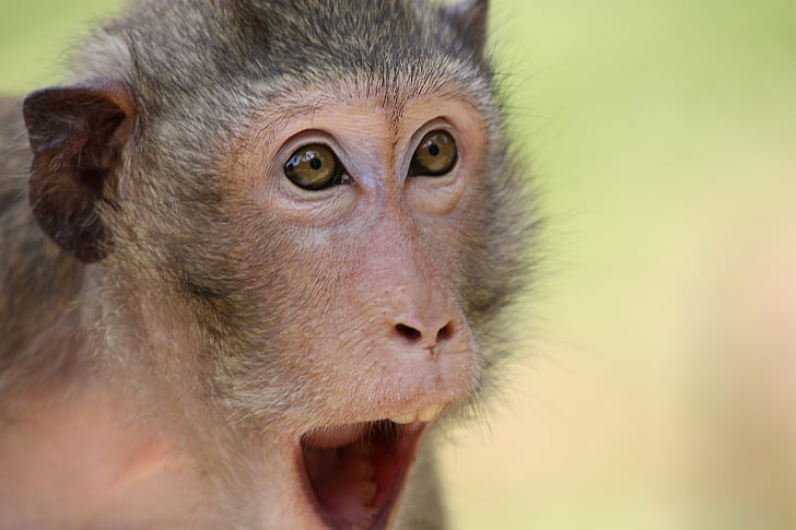 gray monkey in selective focus photography