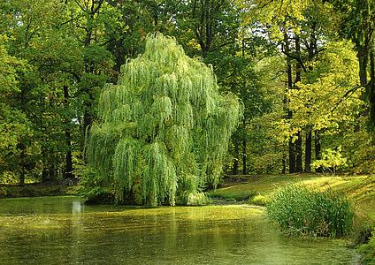 tall trees beside swamp