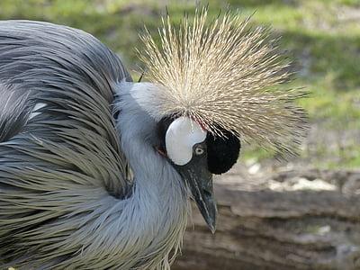 close up photo of white and black bird