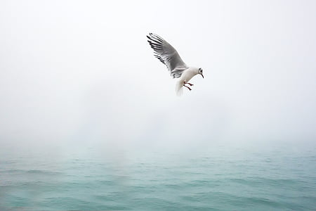seagull flying near surface of body of water