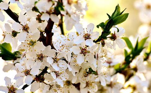 closeup photo of white cherry blossom