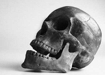 closeup photo of gray human skull