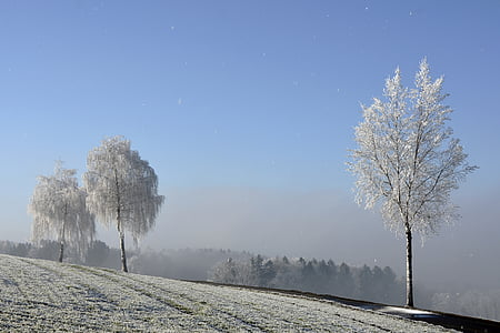 three trees covered with snow