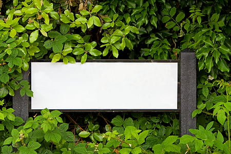 white wooden signage surrounded by green leafed plants