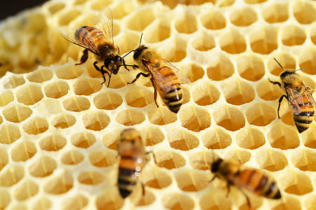 close-up photo of honeybees on honeycomb