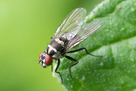 macro shot of house fly