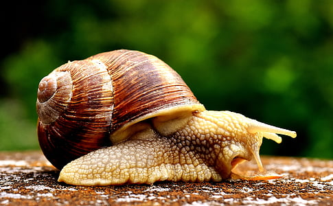 close-up photograph of snail