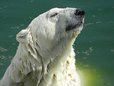 polar bear on body of water