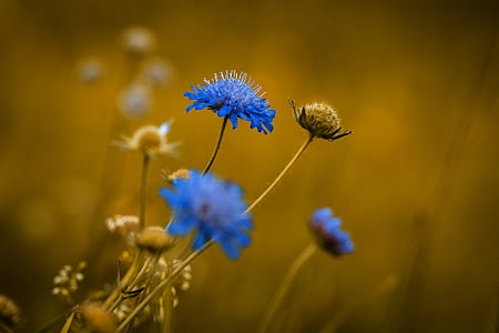 blue petaled flowers in closeup photo