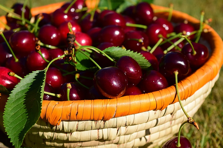selective focus photography of basket full of cherries