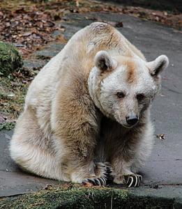 bear sitting on ground